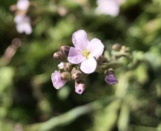 4 petal pink