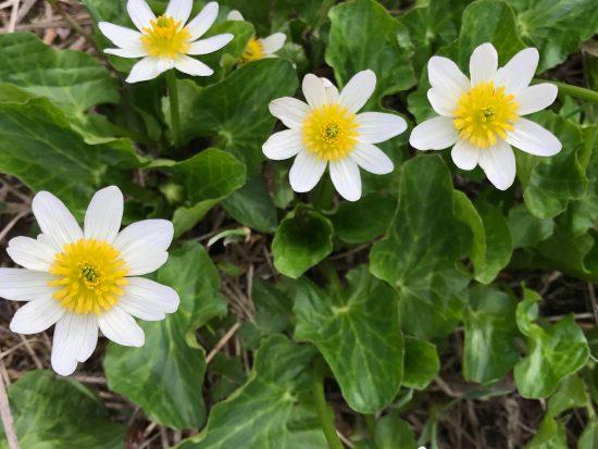 white 8 petaled flower