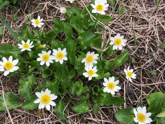 white flower near river