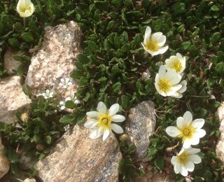 Small white flower with yellow center