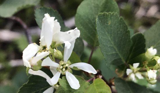Narrow petaled white flower on a tree
