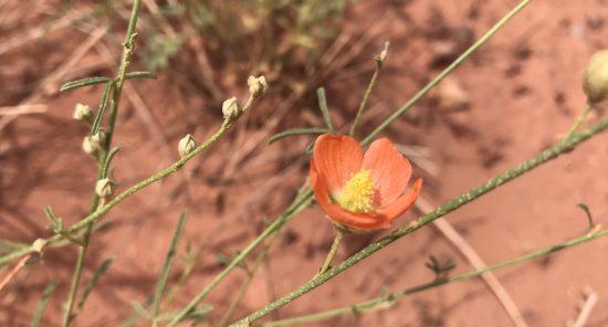 Orange flower in sandy areas