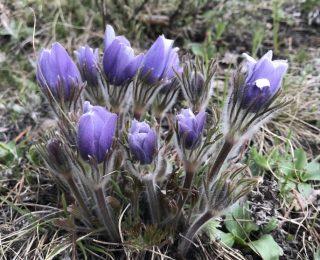 purple closed flower