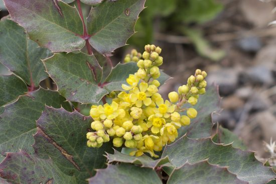 Yellow Circular Flower
