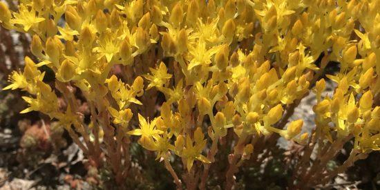 Yellow flower red stem